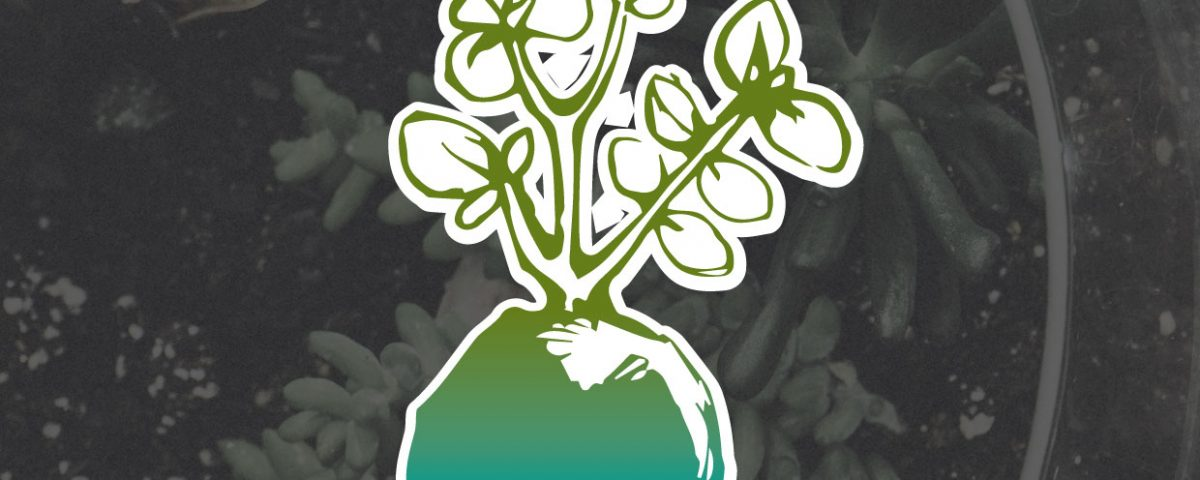 Plant and chat logo over succulent plants